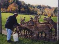Feeding deer in Hawkesbury